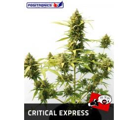 CRITICAL EXPRESS