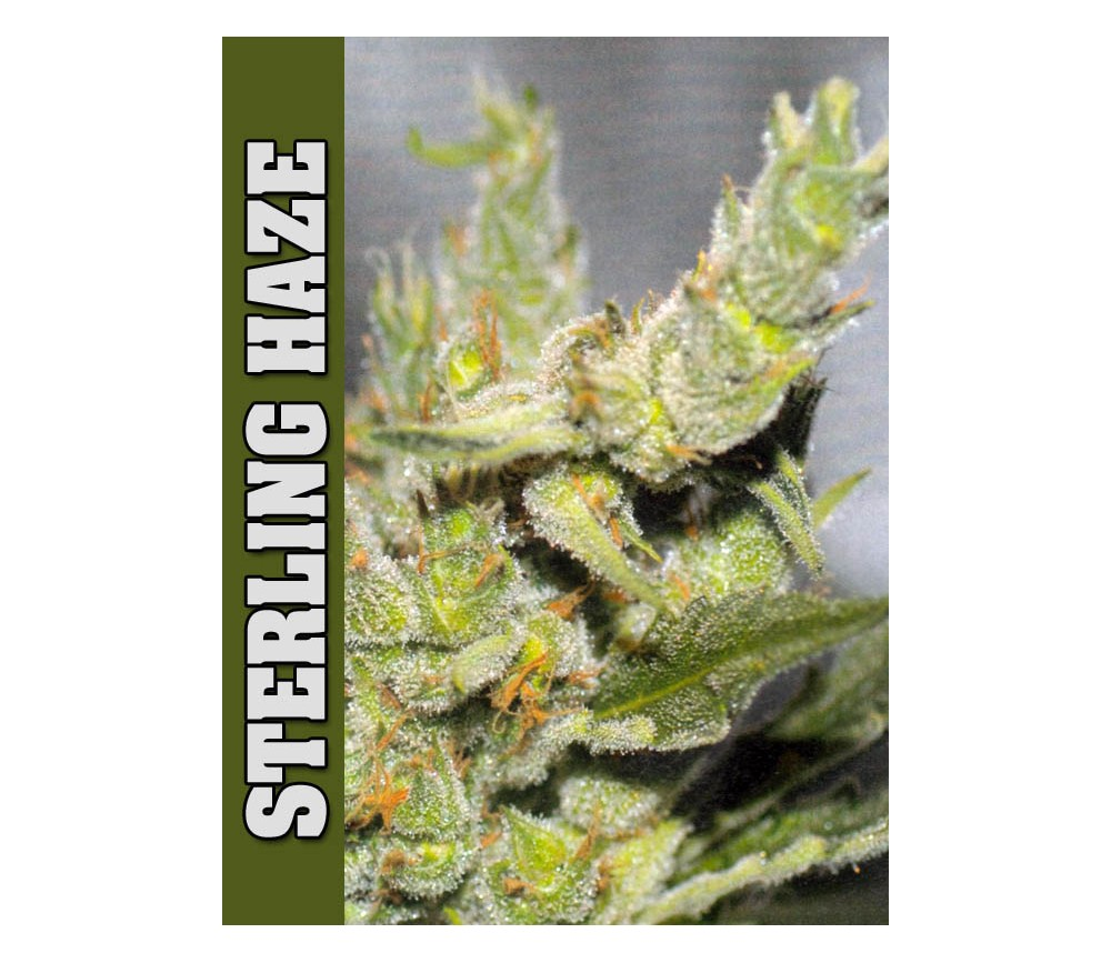 STERLING HAZE