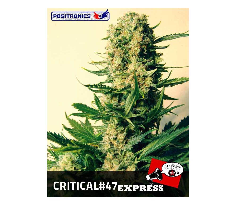 CRITICAL 47 EXPRESS