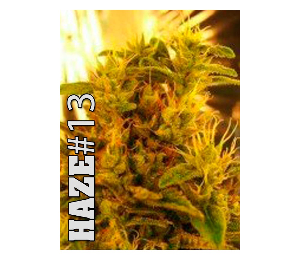 HAZE 1