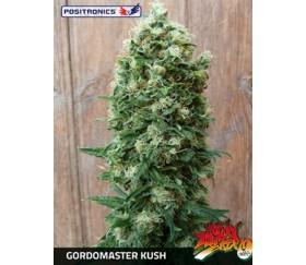 GORDO MASTER KUSH