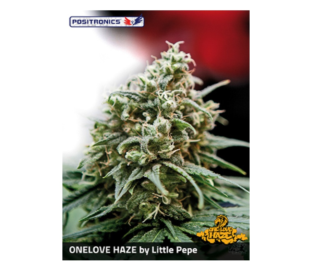 Venta de One Love Haze de Positronics Seeds