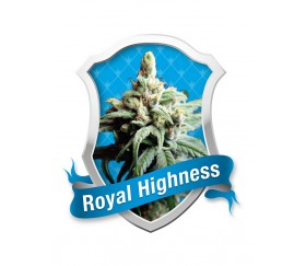 ROYAL HIGHNESS