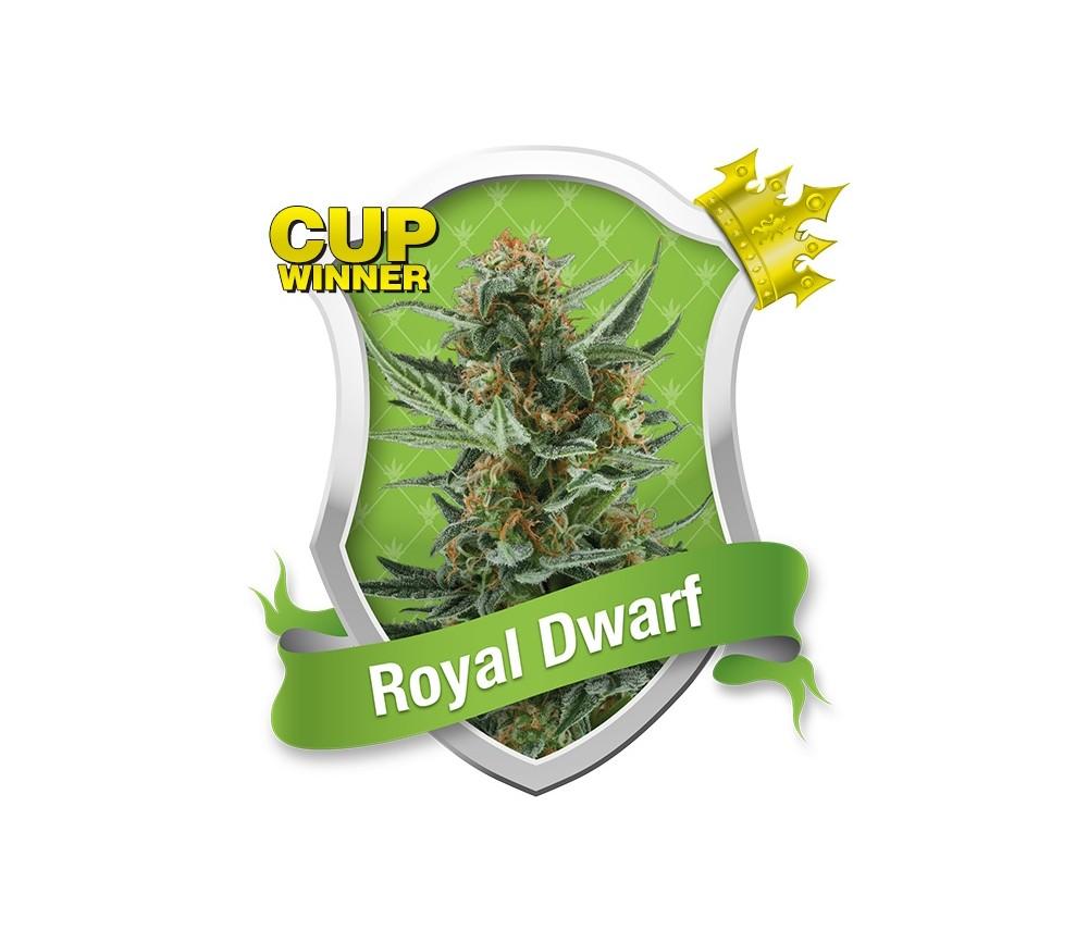 ROYAL DWARF