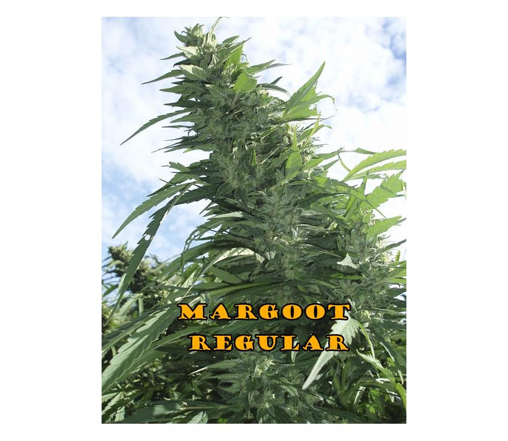 MARGOOT REGULAR