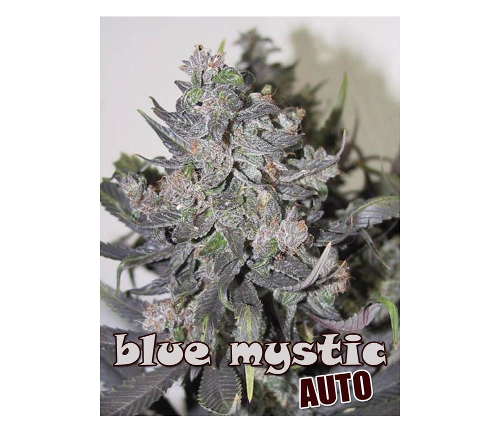 BLUE MYSTIC AUTO