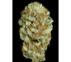 Blue Kush Dinafem Seeds