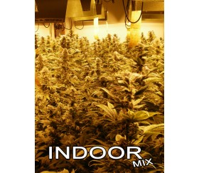INDOOR MIX REGULARES