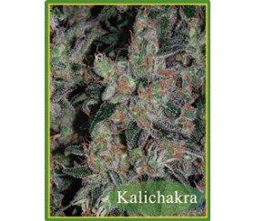 KALICHAKRA REGULARES