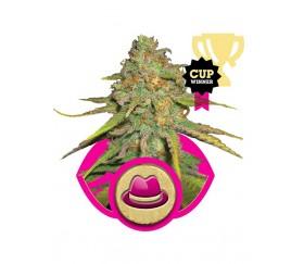 OG Kush - Royal Queen Seeds