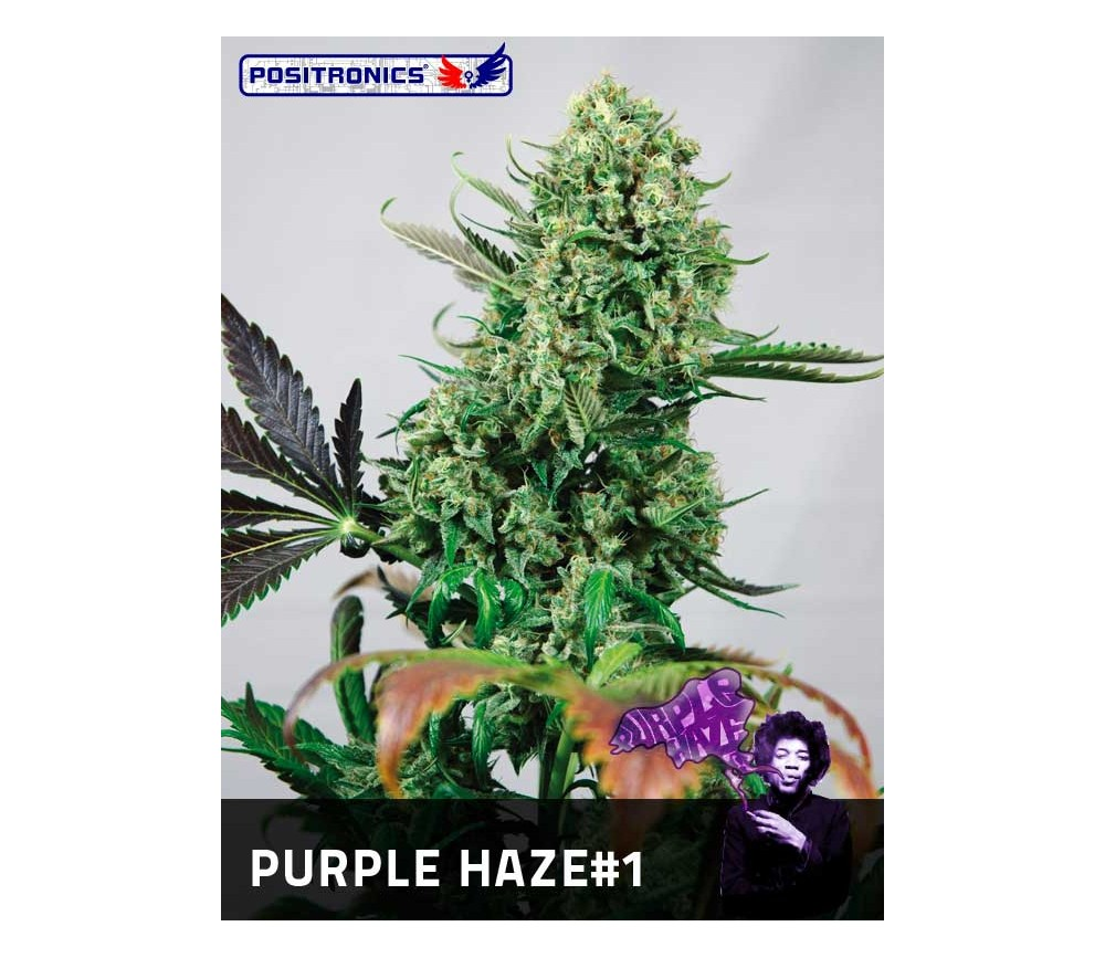 PURPLE HAZE 1