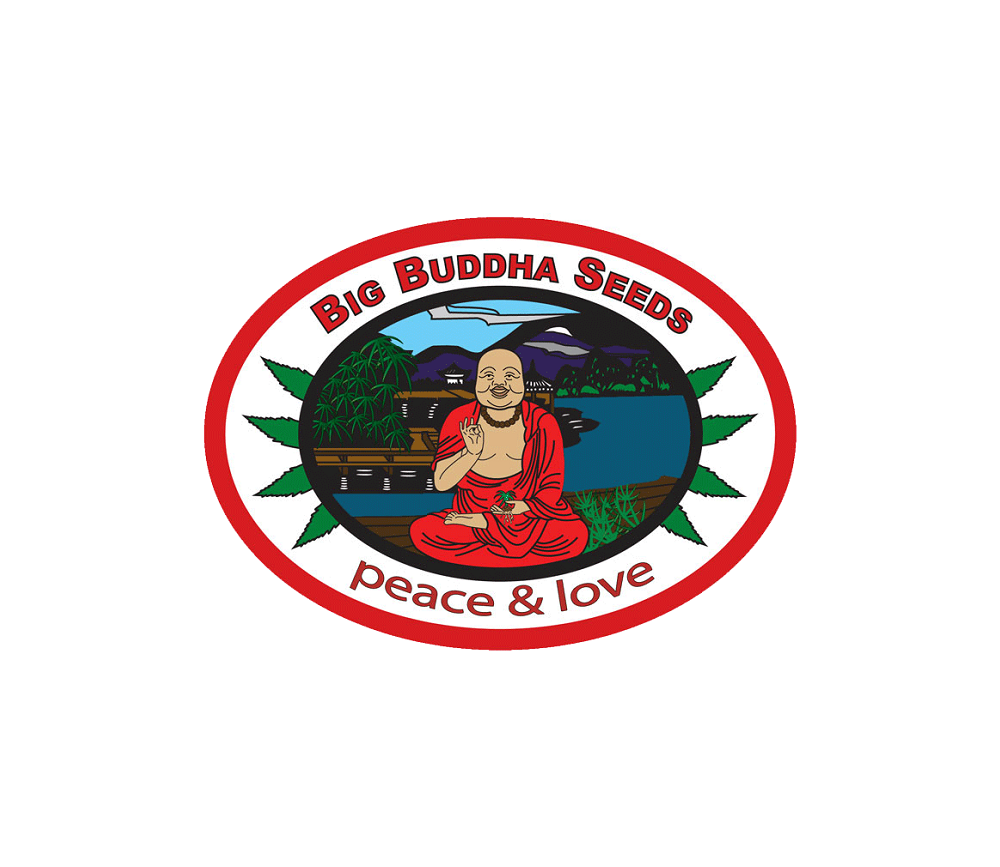 Hindu Cream - Big Buddha Seeds