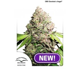CBD Charlotte's Angel - Dutch Passion
