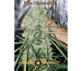 The Cinderella's - Sumo Seeds