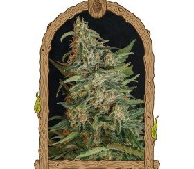 Green Gummy - Exotic Seeds
