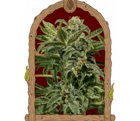 Russian Automatic - Exotic Seeds