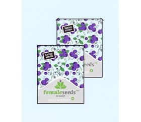 Dream Berry - Female Seeds