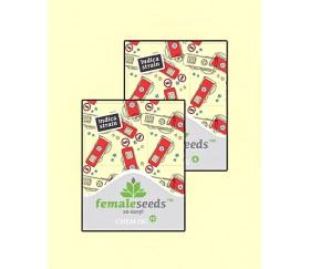 Chem OG - Female Seeds