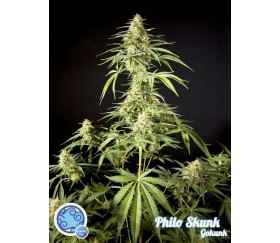 Philo Skunk Gokunk - Philosopher Seeds