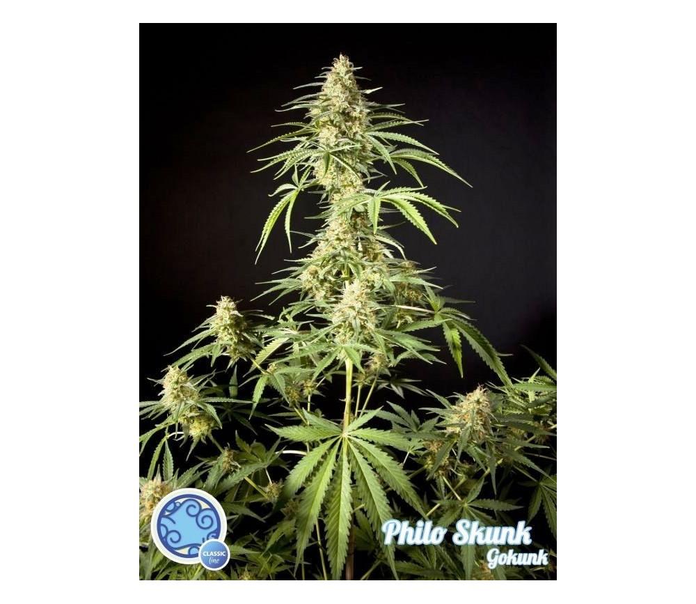 Philo Skunk Gokunk - Philosopher Seeds