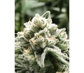 Sublimator - R-Kiem Seeds