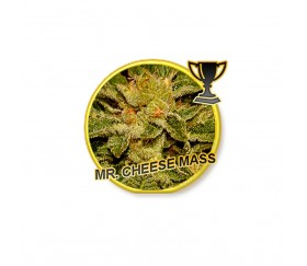 Mr Cheese Mass - Mr Hide Seeds