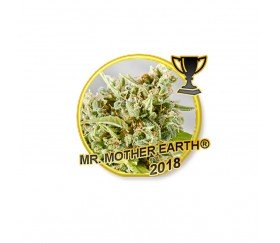 Mr. Mother Earth - Mr. Hide Seeds