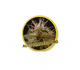 Auto Winweed CBD - Mr. Hide Seeds