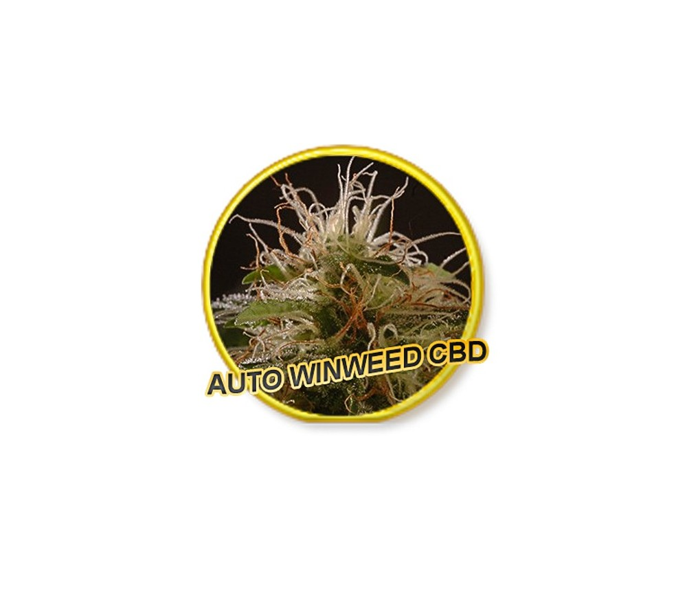 Auto Winweed CBD - Mr. Hide Seeds