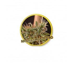 Mr. Piaya Haze - Mr. Hide Seeds