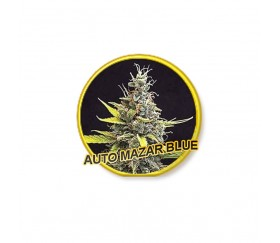 Auto Mazar Blue - Mr. Hide Seeds