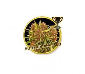 Auto Critical Red - Mr. Hide Seeds