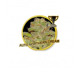 Auto Northern Cream - Mr. Hide Seeds