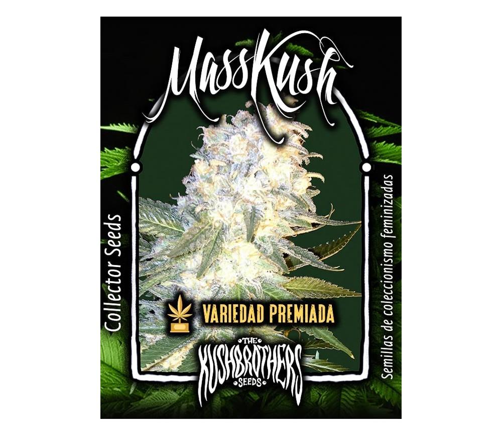 Masskush - The Kush Brothers