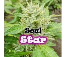 Soul Star - Dr Underground