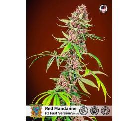 Red Mandarine F1 Fast Version - Sweet Seeds