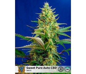 Sweet Pure Auto CBD - Sweet Seeds