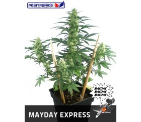 MAY DAY EXPRESS
