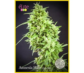 Amnesia Haze Ultra CBD - Élite Seeds
