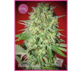Bestial Skunk - Élite Seeds