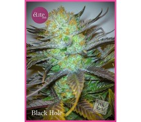Black Hole - Elite Seeds