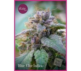 Blue Élite Índica - Élite Seeds