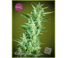 Elite 47 Autofloreciente - Élite Seeds