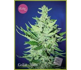 Goliat - Élite Seeds