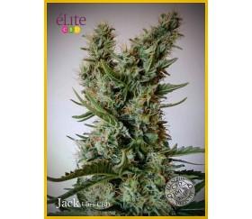 Jack Ultra CBD - Élite Seeds