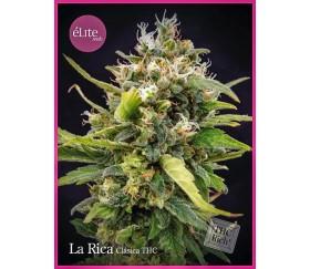La Rica Clásica THC - Élite Seeds