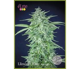LLimonet Haze Auto CBD - Élite Seeds