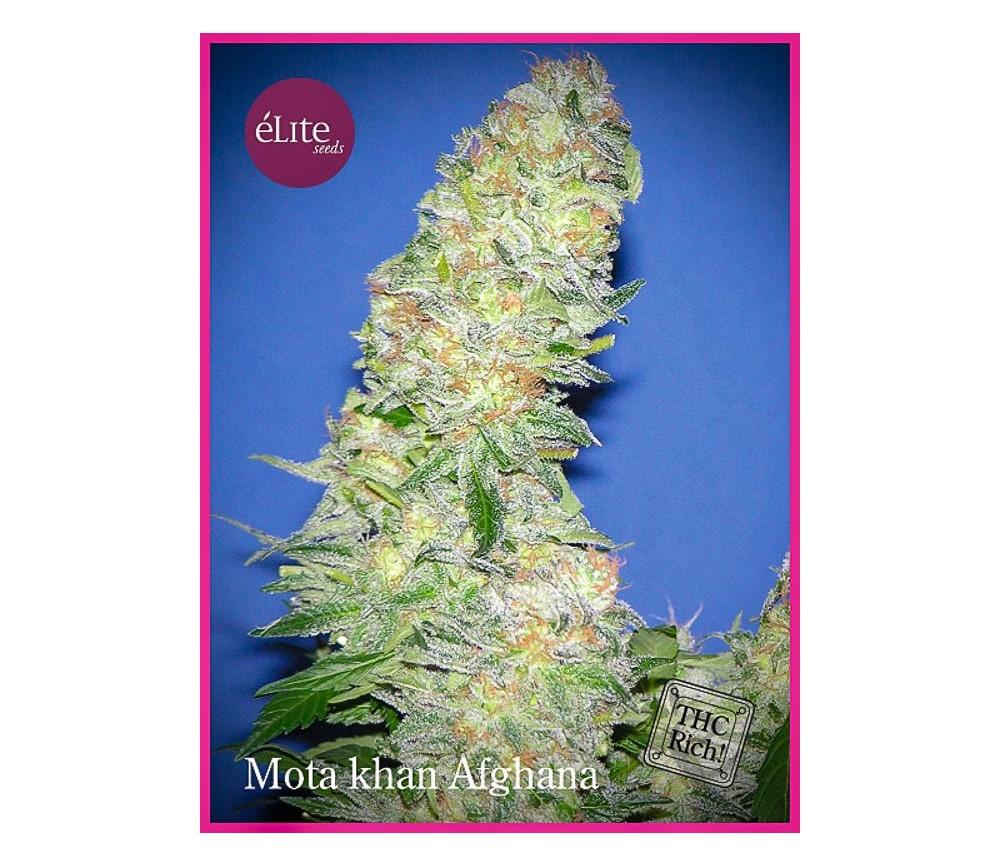 Mota Khan Afghana - Élite Seeds