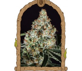 Zkittalicious - Exotic Seeds
