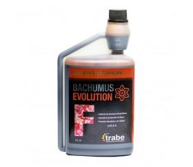 TRABE BACHUMUS EVOLUTION FLORACIÓN